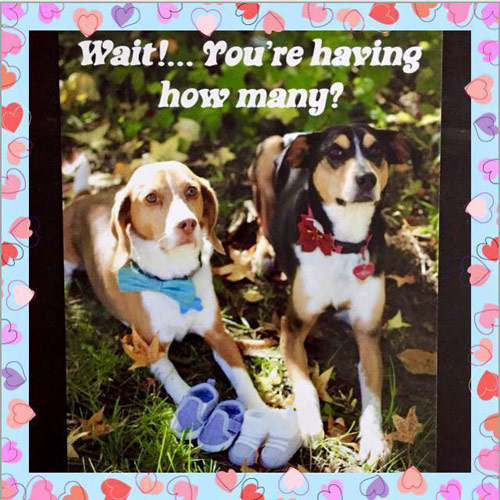 Wait! You're having how many? Dogs announce twin pregnancy.